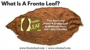 What Is A Fronto Leaf?  [Everything You Need To Know]