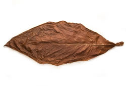 Light Fire Cured Fronto Leaf