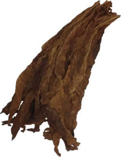 Aged Dark Air Cured Fronto Leaf [S1]
